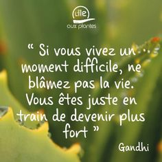 Super quotes funny positive sayings Ideas Motivacional Quotes, Love Quotes, Funny Quotes, Optimist Quotes, Strong Words, Quote Citation, French Quotes, Gandhi, Super Quotes
