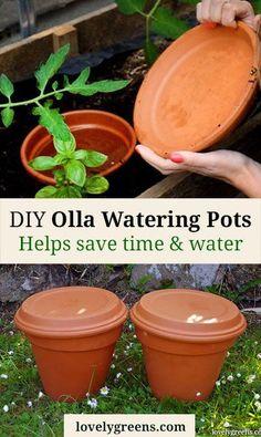 DIY Olla Watering Po