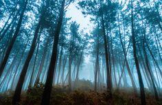Bosque de Sandamías by Saghani  on 500px
