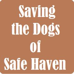 Saving The Dogs of Safe Haven