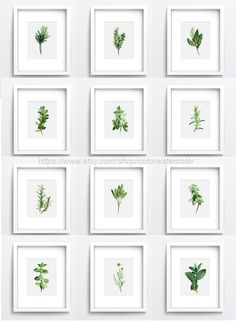Herbs Chart Set of 12, Spices Wall Decor, Kitchen Art Print Giclee, Botanical Illustrations, Watercolor Green Home Decor, Plants