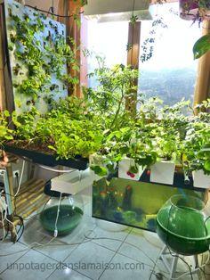 Au Labo, évolution de notre système aquaponique | Cosmic garden
