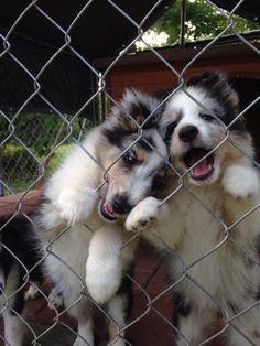 Help! Let us out!