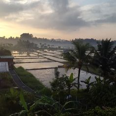 Every morning the view from the farm blows our minds.. This is what we get up to this is where we dream where we grow our plants and harvest our fruits #grateful #earth #wisdom #religion #green #soil #farm #garden #permaculture #organic #sunrise #view #goodearthfarm #bali