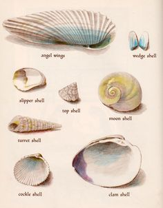 Common shell names   -   ?wedge shell