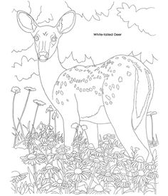 Deer, flower drawing Welcome to Dover Publications
