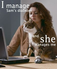 Managing diabetic cats.   #pet #care #diabetic #cats #health #education #tips
