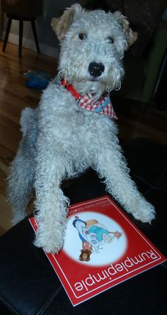 Rumplepimple is a wire fox terrier on a mission. Have you read his book?