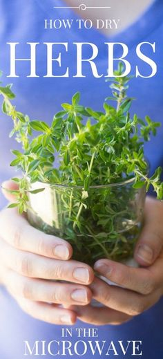 HOW TO DRY HERBS IN THE MICROWAVE ~ I'll show you how to preserve all your favorite herbs quickly and easily! ~ theviewfromgreatisland.com