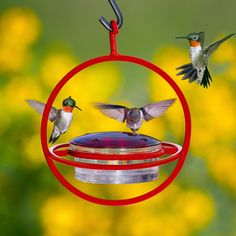 Enjoy the beautiful sight and sounds of hummingbirds right outside your window. This bird feeder lets them eat and provides a place for them to perch.