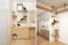 A kitty loo concealed in a drawer and a climbing wall in a house by Japanese firm Asahi Kasei.