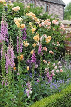 English Roses Crown Princess Margareta rose, with Leander in background. Garden Escape, Cottage Garden Plan, Dream Garden, Cottage Garden Borders, Border Garden, Cottage Gardens, Garden Shrubs, Garden Plants, House Plants