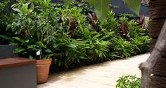 DIG Landscaping - Sydney based residential landscaping company - Projects