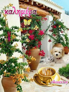 Good Morning Picture, Good Morning Good Night, Morning Pictures, Good Morning Messages Friends, Birthday Wishes For Kids, Beautiful Pink Roses, Greek Language, Coffee Images, Greek Quotes