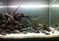 Bildergebnis für biotop aquarium
