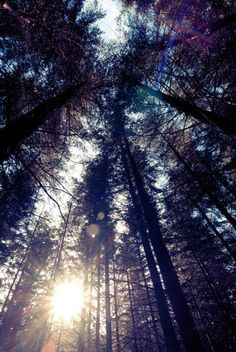 Cold forest sun | Flickr - Photo Sharing!