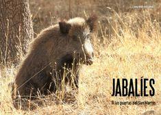 Es Madrid no Madriz Magazine Fauna, Madrid, Natural, Animals, Doors, Animais, Animales, Animaux, Animal