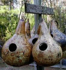 "Gourds - I kinda love gourds.  and I love saying ""are you out of your gourd?!"""