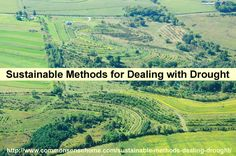 Sustainable Methods Dealing with Drought - 3 organic strategies to make your farm or garden more drought tolerant so you can still produce a crop when rain is scarce. Homestead Survival, Survival Skills, Survival Tips, Organic Gardening, Gardening Tips, Vegetable Gardening, Container Gardening, Homestead Gardens, Permaculture Design