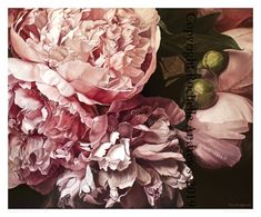 'Antique Pink Peonies' Limited Edition Print (663 x 550mm) — Rochelle Andrews Peony Print, Pigment Ink, Pink Peonies, Limited Edition Prints, All Print, Paper Size, Original Paintings, Antiques, Artist