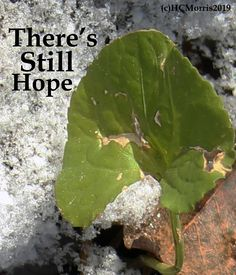 a green ivy leaf and snow with there's still hope words