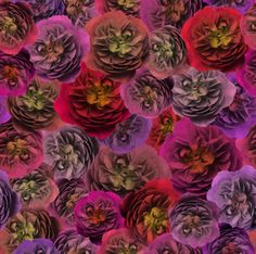Product: 33536-Mighty Peonie