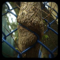 Man vs. Nature   Flickr - Photo Sharing!