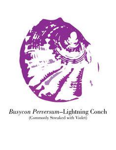 Violet Lightning Conch Illustration by WallpaperGirlCabinet, $4.00