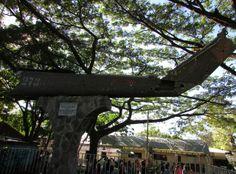 Avion UH1H derribado por la guerrilla, vestigio de la guerra en El Salvador, convertido en monumento, Cinquera, Cabanas Photo: Paty Silva