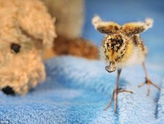 Saving the Spoons: Conservationists Rush to Save a Dying Adorable Species : The Featured Creature