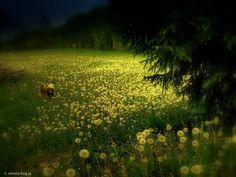 łąka nocą - Szukaj w Google