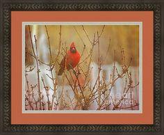 Bird Deja Vu Framed Print By Shelly Weingart