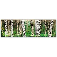Trademark Fine Art PanorAspens 4 inch Canvas Art by Roderick Stevens, Size: 8 x 24, Multicolor