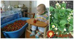 Jahody mi rastú samé od seba – ako v lese: Poradím, ako budú aj vám! Edible Garden, Gardening Tips, Dog Food Recipes, Pergola, Kids Rugs, Garten, Kid Friendly Rugs, Vegetable Gardening, Vegetables Garden