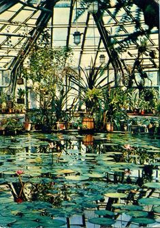 Greenhouse with a Koi pond in it?? Now that's what I'm talking about!!!