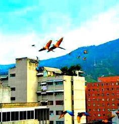 Vuelo de Guacamayas adornan el cielo y El Ávila se puede ver desde cualquier lugar de Caracas