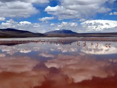 Flamingos in Eduardo Avaroa Natural Reserve - Bolivia. By Saharell.