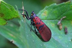 insect beauty