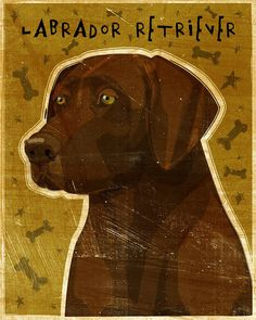 Labrador Retriever Chocolate No 2 Print 8 in x 10 by johnwgolden