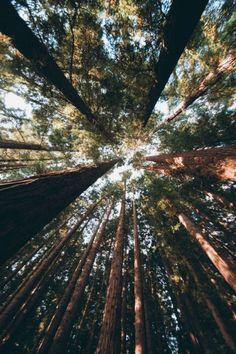 #hullocolin: East Warburton Redwood Forest Australia Tumblr |...