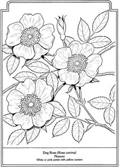 Language Of Flowers Sample Pages Dover Publications