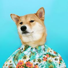 Vintage Hawaiian Print Dog Shirt