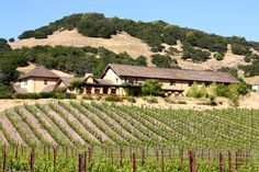 Nicholson Ranch Winery in Sonoma - where Jessica was married, absolutely love this place! @Jessica Hagerty