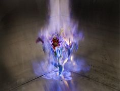 Flowers Beautifully Engulfed in Flames by Jiang Zhi.