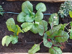 Drip Irrigation — DIY How-to from Make: Projects