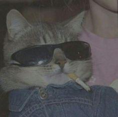 ✔ Anime Cat Wallpaper Kitty - New Ideas Funny Cats, Funny Animals, Cute Animals, Cats Humor, Grumpy Cats, Cute Cat Wallpaper, Cat Icon, Cat Aesthetic, Aesthetic Dark