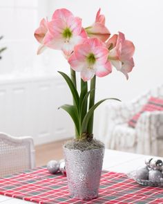 Foolproof Flower: Amaryllis Bulbs Bloom in the Most Unlikely Places from HGTV