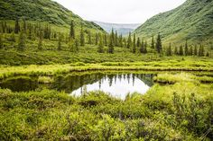 -- Reflection Pond near Denali, Alaska --
