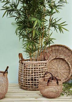 Bamboe in een pot/ mand