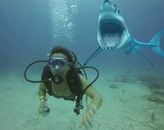 craziest shark pictures ever Shark Pictures, Weird Pictures, Underwater Photos, Underwater Photography, Shark Bait, Megalodon, Great White Shark, Shark Week, Ocean Life